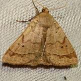8591.1 Phoberia ingenua Juniper Springs Ocala Natl 3-13-12