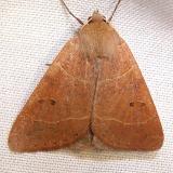 8591.1 Phoberia ingenua Juniper Springs Ocala Natl 3-14-12