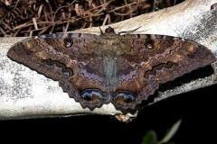 8649 Black Witch 2-28-12 Long Pine Keya, FL