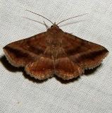 8651 Detracted Owlet Moth Lesmone detrahens yard 9-3-11_opt