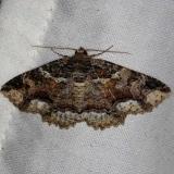 8689 Lunate Moth Thunder Lake Mich UP 6-25-13