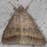 8745 Texas Mocis Moth yard 7-23-13