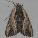 8857 Ultronia Underwing yard Orient Oh 7-13-14