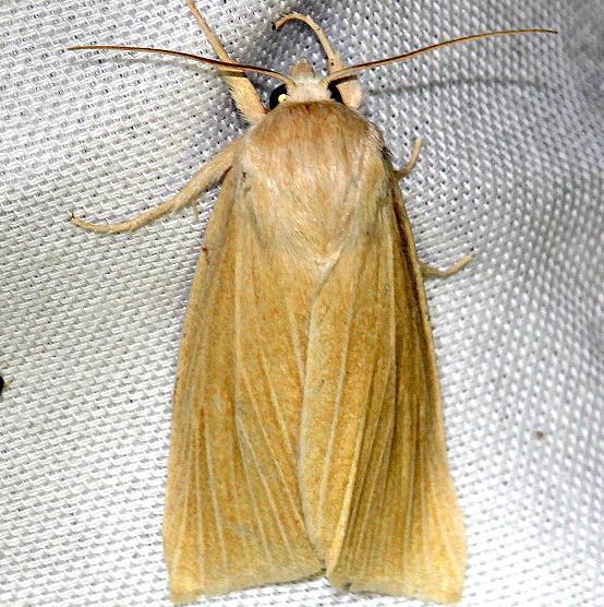 9280 Henry's Marsh Moth Everglade Natl Pk Nike Missle Rd 3-5-13