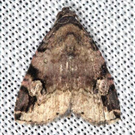 9030 Aerial Brown Moth Battelle Darby Biggert Rd 8-19-16