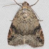 9030 Aerial Brown Moth Campsite 119 Falcon St Pk 10-22-16_opt