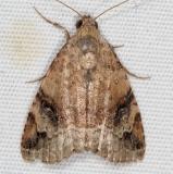 9030 Aerial Brown Moth Campsite 119 Falcon St Pk Texas 10-25-16 (1)_opt