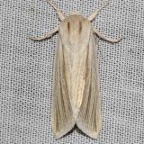 9280 Henry's Marsh Moth yard 5-2-12_opt
