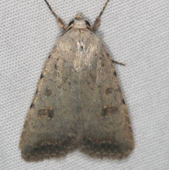 9656 Civil Rustic Moth Moab RV Resort Moab Utah 6-5-17 (8)_opt
