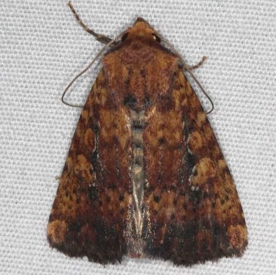 9693 Mobile Grounling Moth yard 6-5-15 (4)_opt
