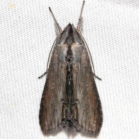 10200 Asteroid Moth yard 8-29-12
