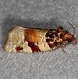 3599 Argyrotaenia floridana markings a little different from all MPG pics Oscar Scherer St Pk 3-14-15