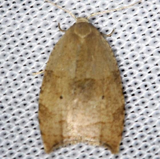 3747 The Batman Moth Shawnee St Pk Oh 6-15-13