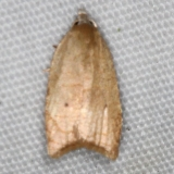 3747 The Batman Moth yard 9-5-15 (3)_opt