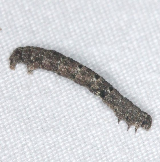 Unknown Caterpillar yard 8-30-14 (3)_opt