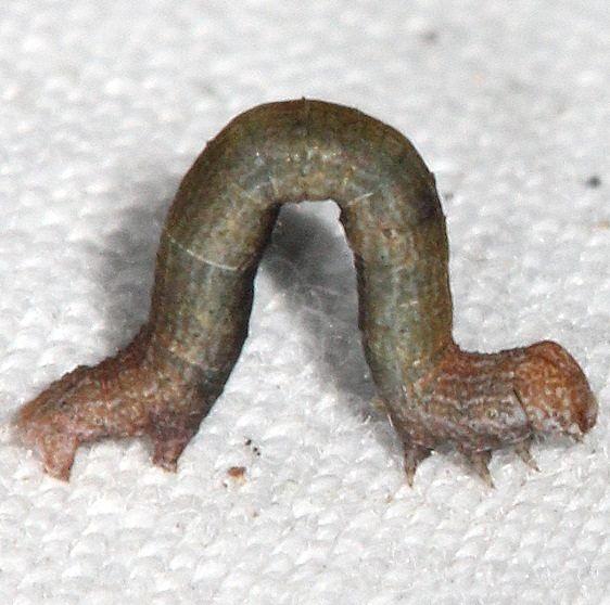 Unidentified Caterpillar yard 9-20-16_opt