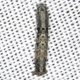 Unknown Caterpillar BG yard 8-18-16 (15)