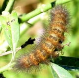 Unknown Caterpillar National Butterfly Gardens 11-2-13_opt