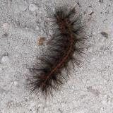 Unknown Caterpillar San Felesco St Pk 3-21-12_opt