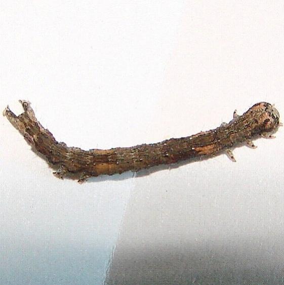 Unknown Caterpillar Yard 8-22-12_opt